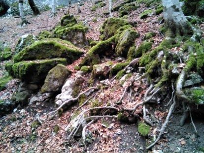 vegetación alpina-Ordesa-ColaCaballo_07