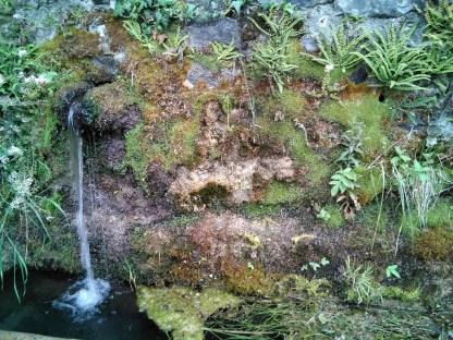 vegetación alpina -Ordesa-fuenteFrajen