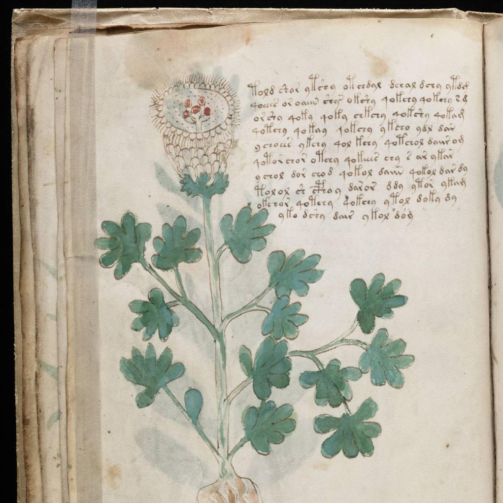 El manuscrito Voynich ¿enigma o broma medieval?