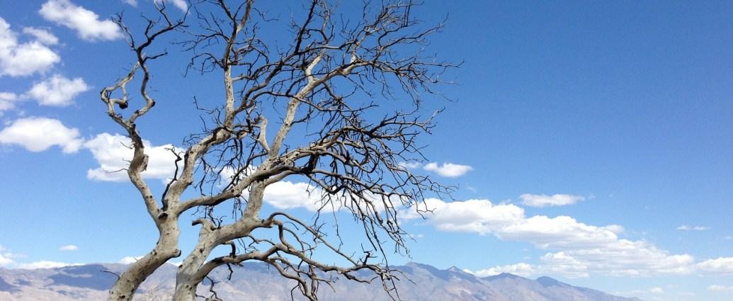 Desertizacion-desertificacion