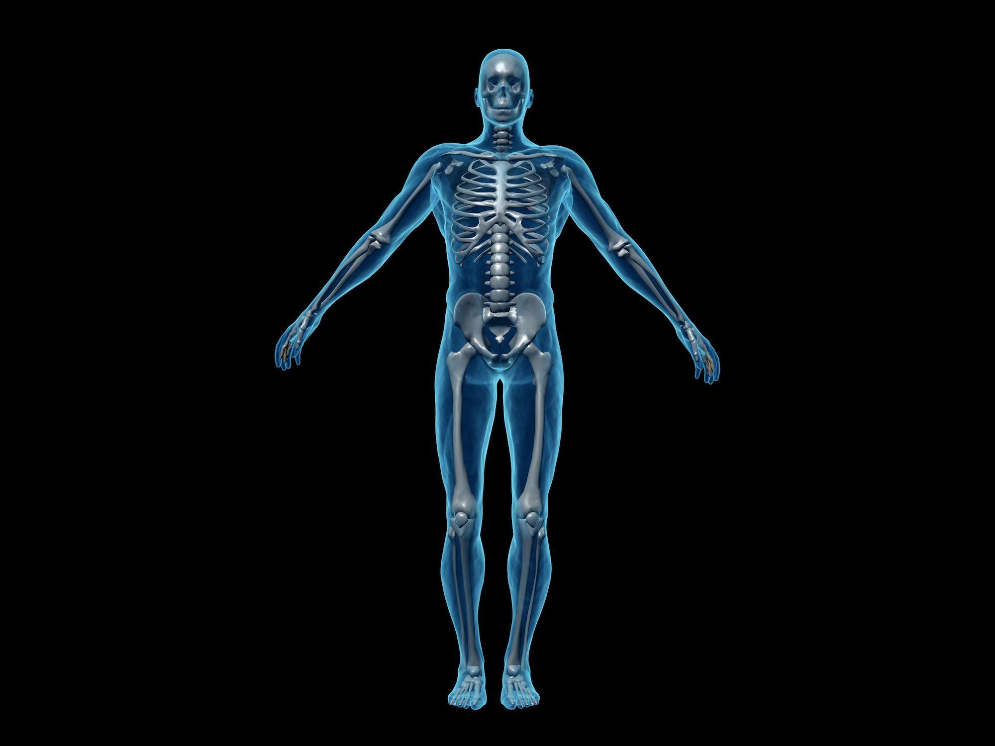 Vital Statistics Of The Male Human Body