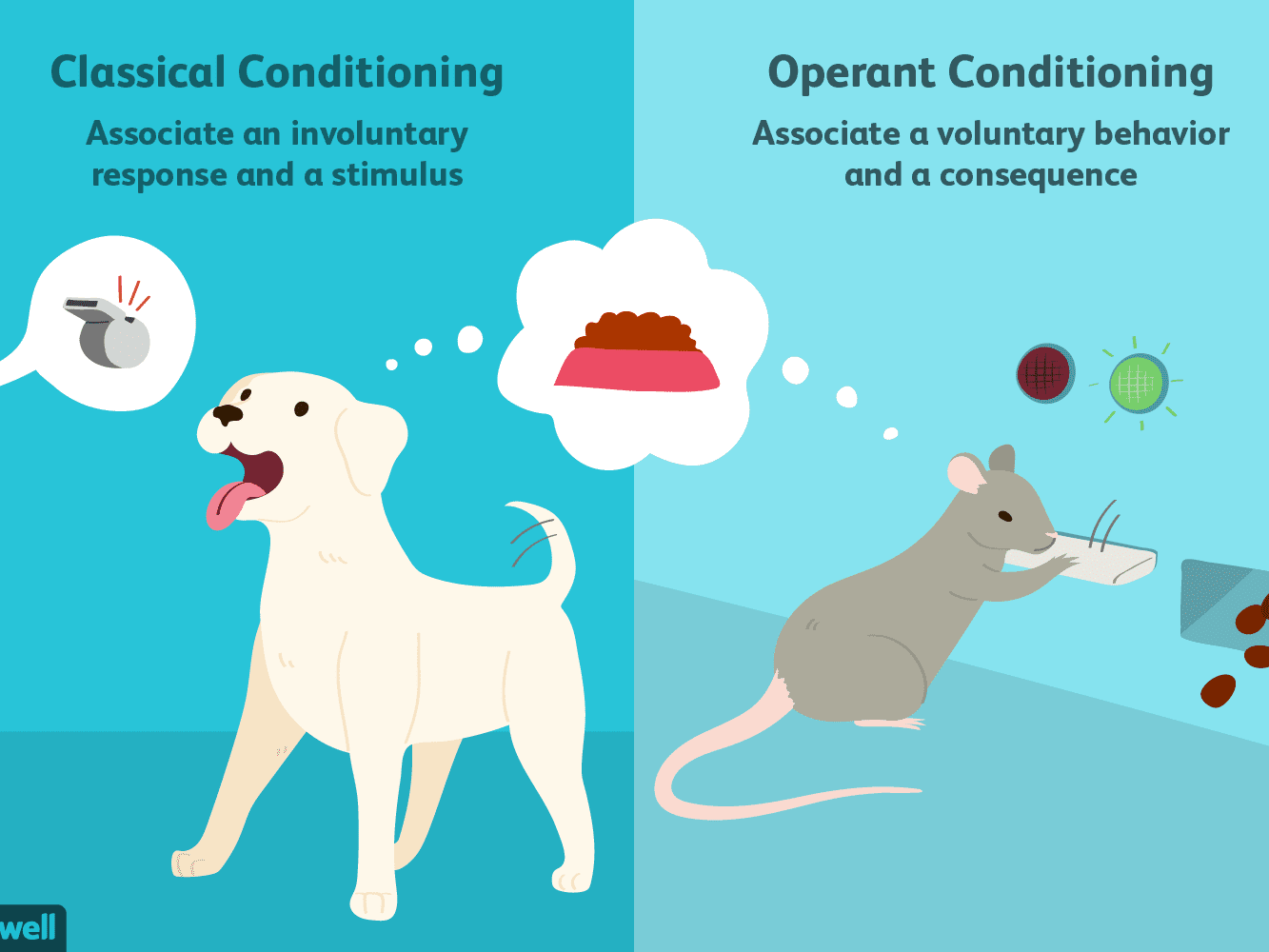 Operant Conditioning Classical Conditioning Examples In