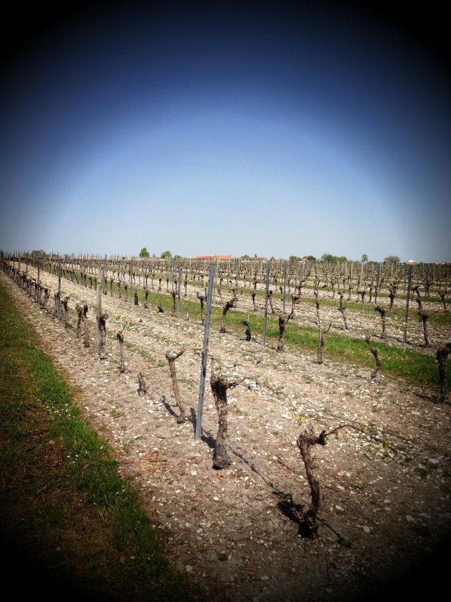 Vignes - cognac - Du Frolet Quintard frères
