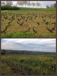 Vignes-Domaine-Plageoles-Gaillac