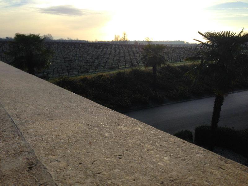 Vue sur les vignes depuis le 1er étage du chai - Château Larrivet Haut Brion - Pessac Léognan