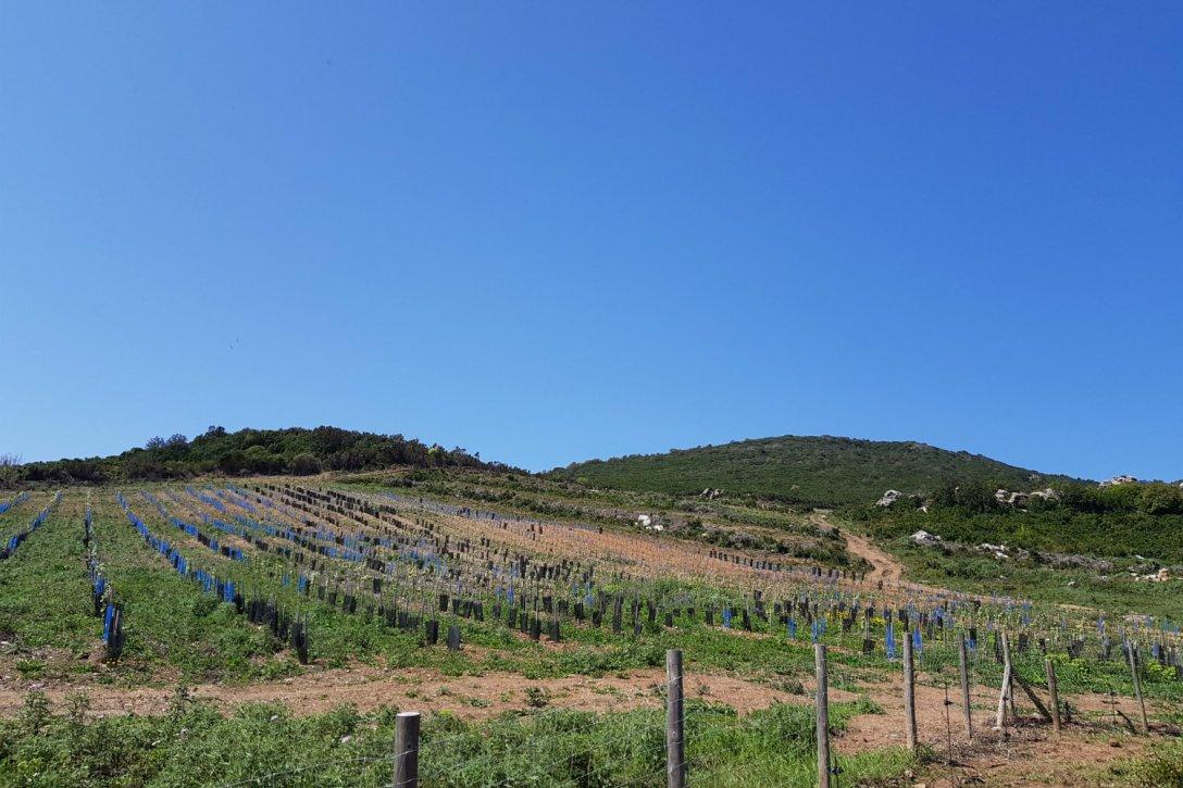 Plantier domaine Pieretti