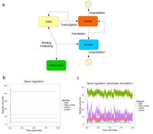 Gene regulation simulation