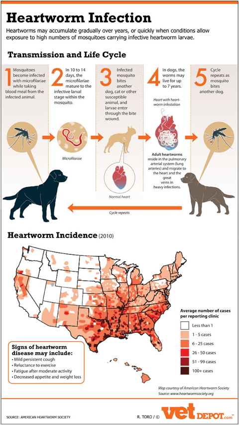 Heartworm Infection