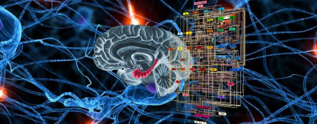Su cerebro en Internet
