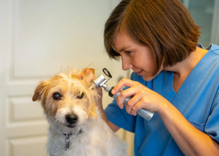 Consultation par le Dr Louise Tulasne de la Clinique vétérinaire des Olympiades