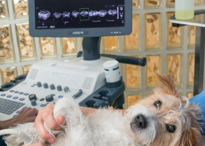 Echographie à la Clinique vétérinaire des Olympiades