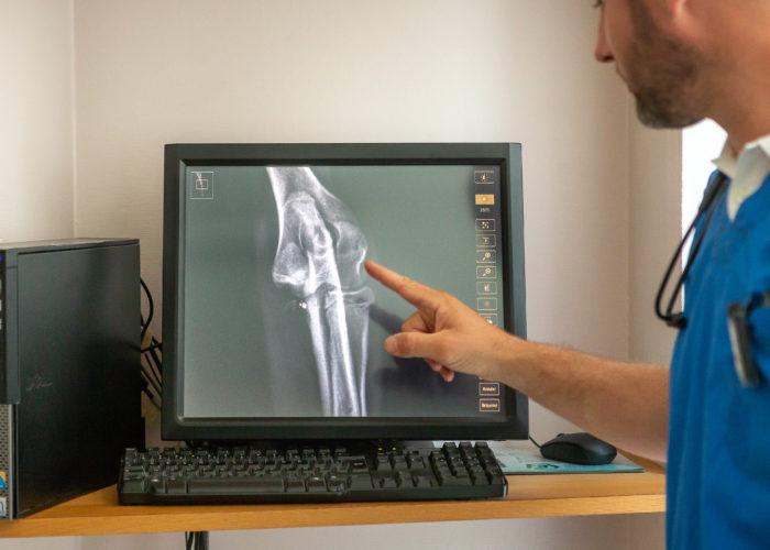 Radiologie avec le Dr Patrice Rault à la Clinique vétérinaire des Olympiades