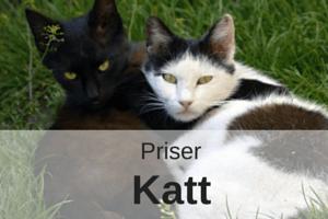 Priser Katt