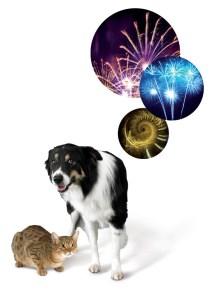 Zylkene-dog-cat-and-fireworks-images_0