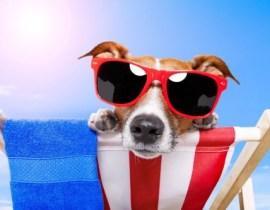 perro-turista-en-la-playa1