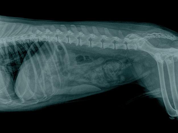 Radioloxía Dixital