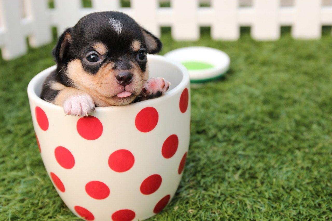 Clinica veterinaria para perros y cachorros en Cornella de Llobregat
