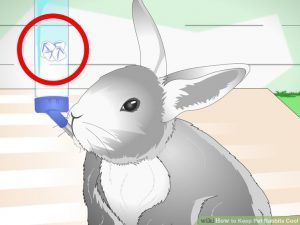 conejo bebiendo