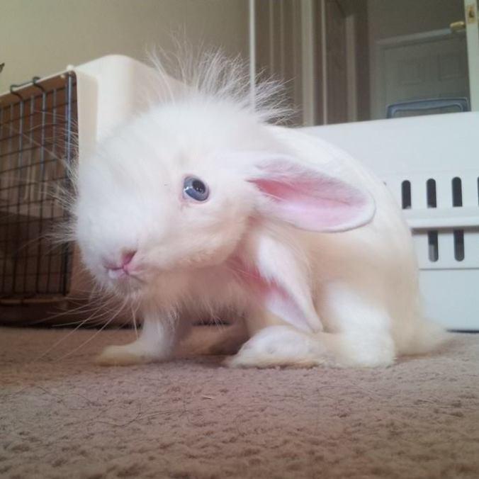 conejo ladea la cabeza