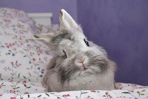 conejo enfermo cabeza