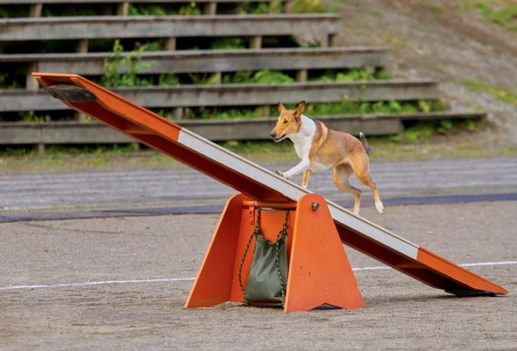 dog-on-lever