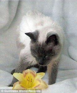 Worlds Oldest Cat (2)
