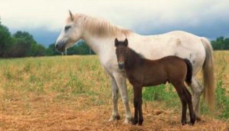 Unbroken Horse