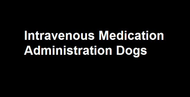 Intravenous Medication Administration Dogs