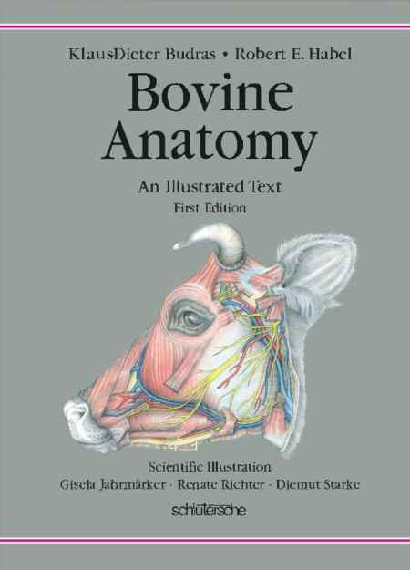 Bovine Anatomy An Illustrated Text First Edition PDF