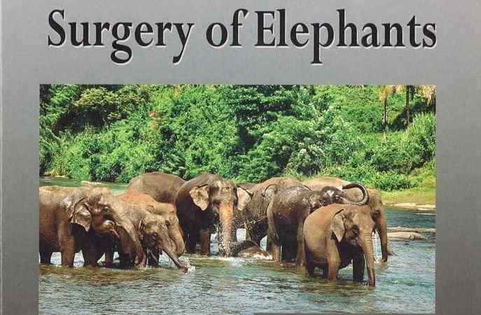 Biology, Medicine, And Surgery Of Elephants PDF