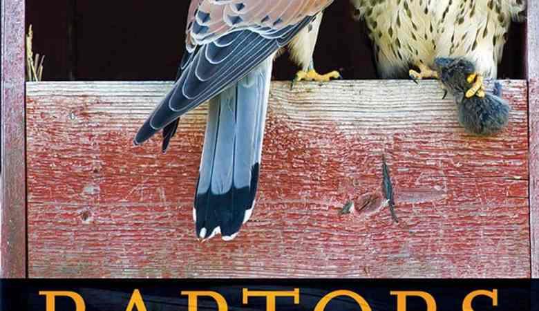 Raptors The Curious Nature Of Diurnal Birds Of Prey PDF