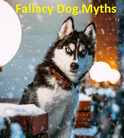 Dog Myths Reported By Technovets