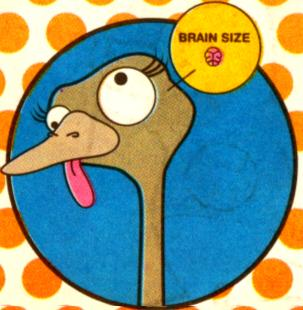 An ostrich's eye is bigger than its brain