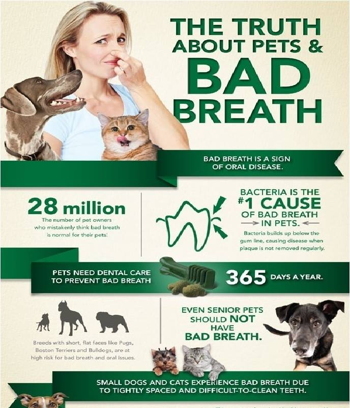 Major reason of Bad Breath in Pets (Cats & Dogs)