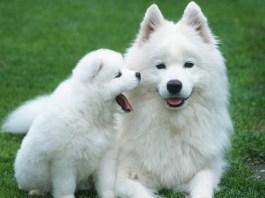 Expensive Dog Breeds
