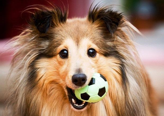 5 Propósitos De Año Nuevo Con Tu Mascota