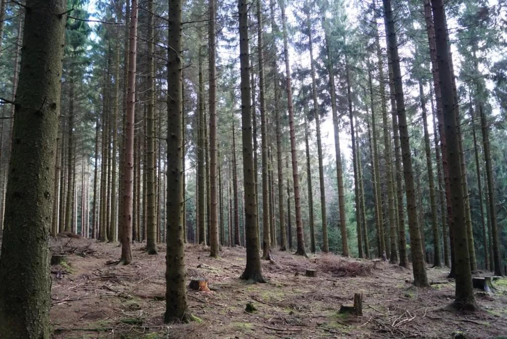 Langs de sporen van de 'vergeten' Slag om het Hürtgenwald