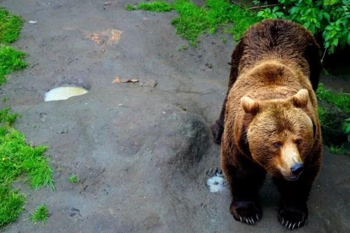 dierentuinen pakawi park