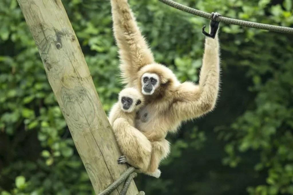 Goed nieuws! Ontdek de 9 dierentuinen in Vlaanderen die opnieuw open mogen