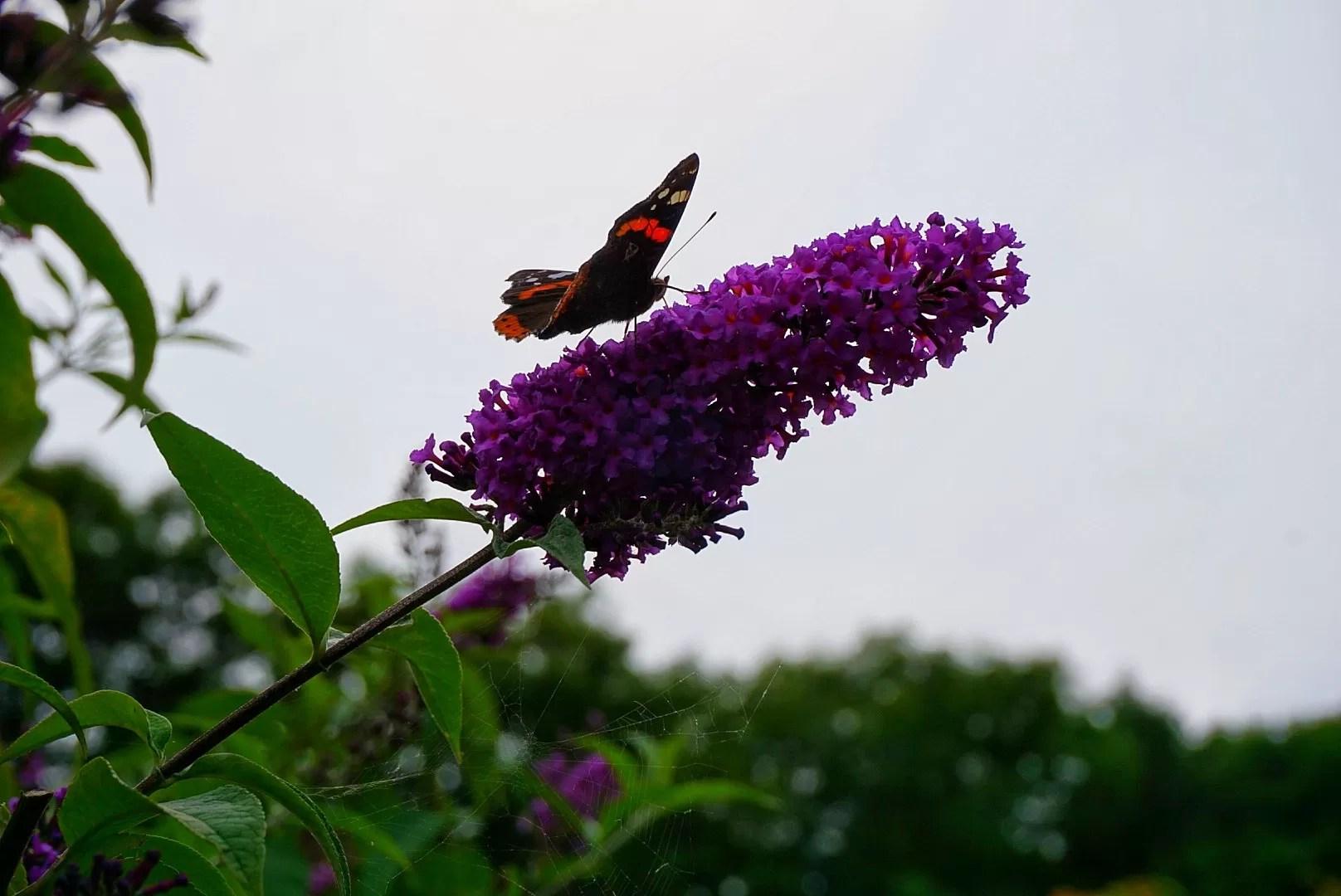 tuin schopsheim voeren