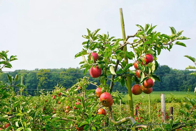 Voeren appelgaard
