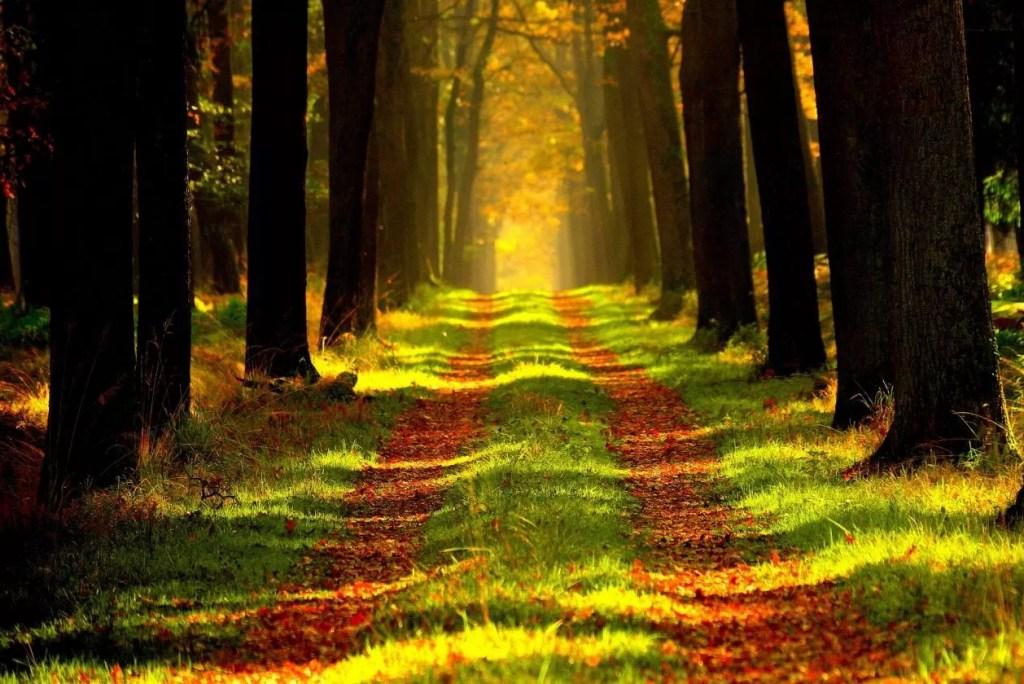 25 fijne plaatsen om te wandelen in Vlaanderen