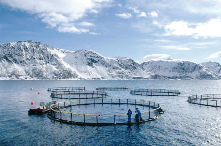ferme de saumon