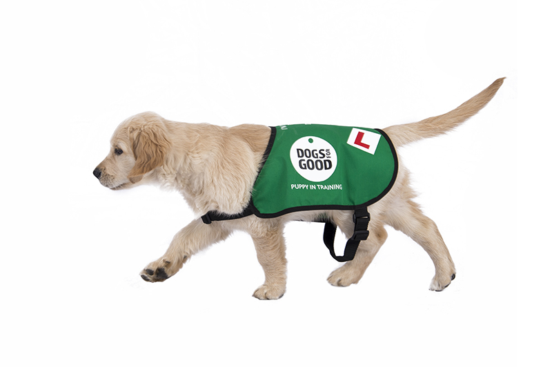 Dogs For Good Puppy