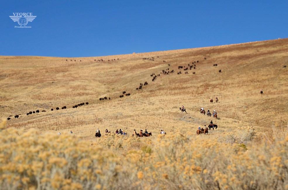 Antelope buffalo