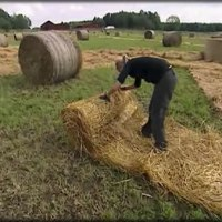 Amazing Race: Crazy Hay