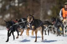 Gerald Wochinger «Schlittenhund»