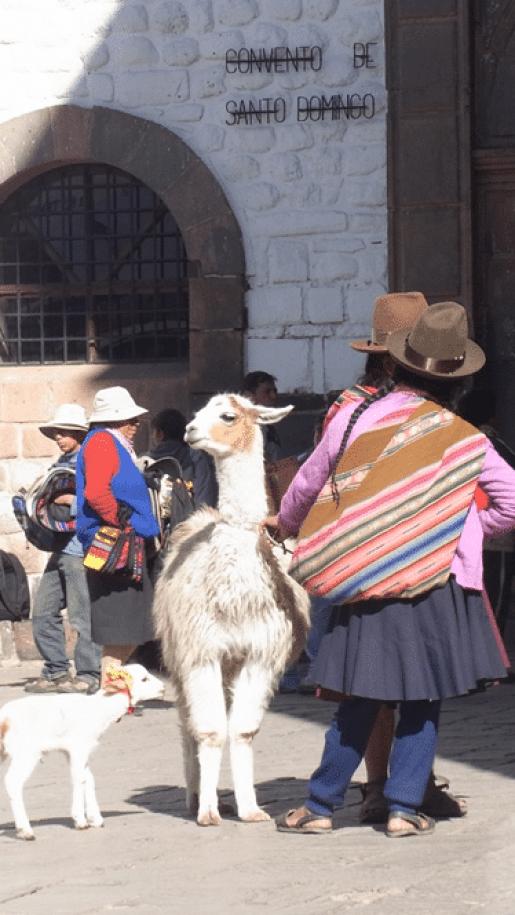 ペルー アルパカ 観光