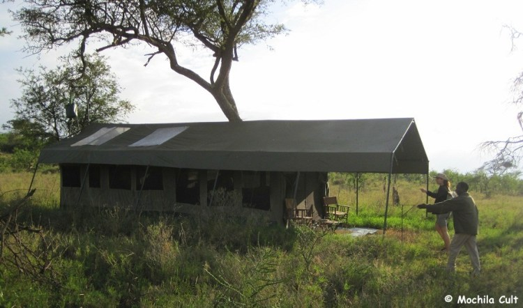 safari9 (7)
