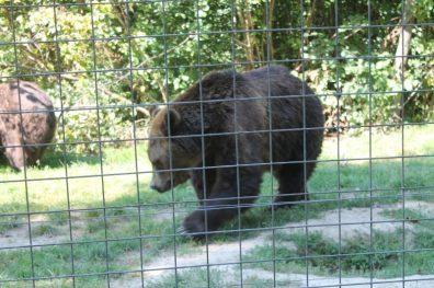 Santuário dos Ursos